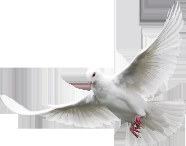 70: ¿Quién Es El Espíritu Santo?